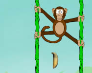 Jungle spider monkey P�kemberes j�t�kok ingyen